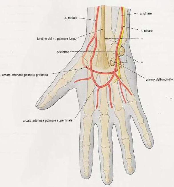 test di allen - pervietà dell'arteria radiale e dell'arteria ulnare
