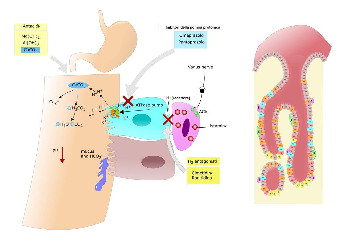 farmaci antiacidi gastroprotettore